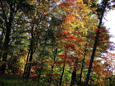 Photograph - Michigan Fall Colors 10 by Scott Hovind