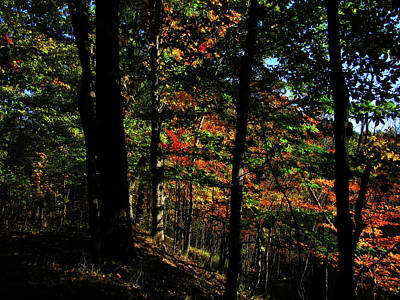 Photograph - Michigan Fall Colors 4  by Scott Hovind