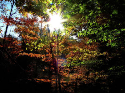 Photograph - Michigan Fall Colors 9 by Scott Hovind