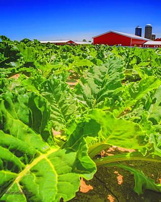 Photograph - Michigan Surgar Beet Farming by LeeAnn McLaneGoetz McLaneGoetzStudioLLCcom