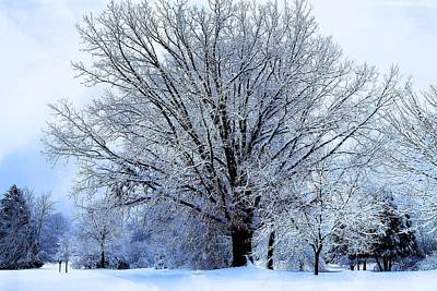 Photograph - Michigan Winter 18 by Scott Hovind