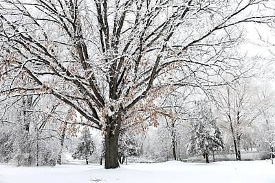 Photograph - Michigan Winter by Scott Hovind