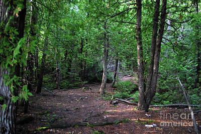 Photograph - Michigan Woods by Gary Wonning