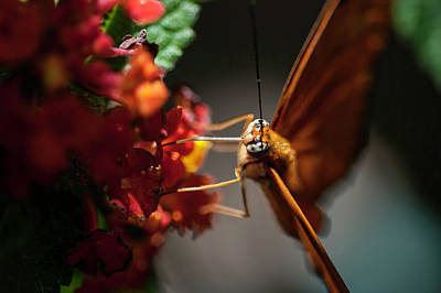 Photograph - Micro Landing by Kathleen Messmer