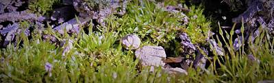 Photograph - Microgarden by Amanda Balough
