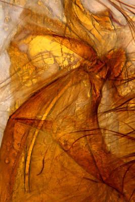 Microscopic Mixed Media - Microscopic Angels by Marcus Kett