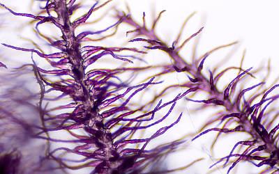 Photograph - Microscopic Grass Stalk by Kenneth Albin