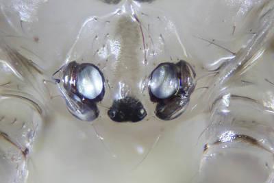 Microscopic Mixed Media - Microscopic Spider 001 by Marcus Kett