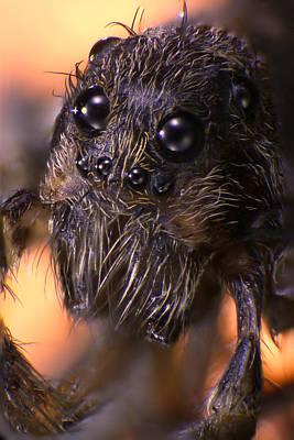 Creepy Mixed Media - Microscopic Spider 005 by Marcus Kett