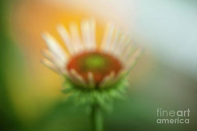 Photograph - Mid Bloom by Scott Kemper