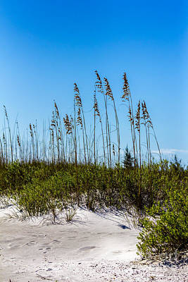 Mid Day Dunes Art Print by Marvin Spates