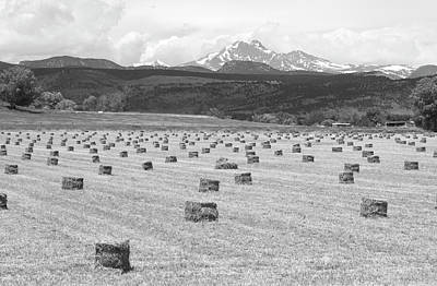 Mid June Colorado Hay  And The Twin Peaks Longs And Meeker Bw Print by James BO  Insogna