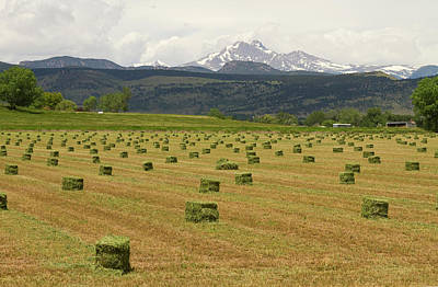 Mid June Colorado Hay  And The Twin Peaks Longs And Meeker Art Print by James BO  Insogna