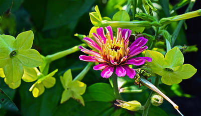 Photograph - Mid September Garden Zinnia And Nicotiana by Janis Nussbaum Senungetuk