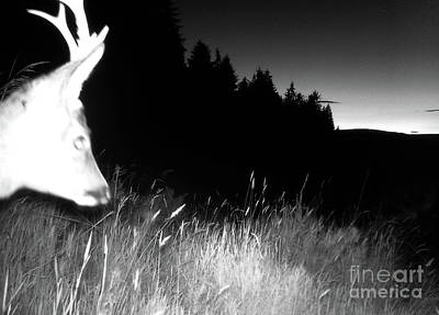 Digital Art - Mid Summer Night In The Forest by Phil Banks