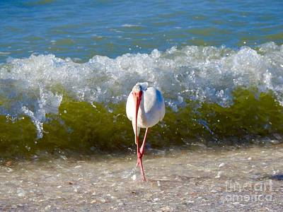Photograph - Mid Wave Feeding by Frank Williams