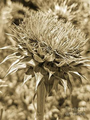 Photograph - Midas Touch Thistle by Maria Urso