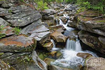 Photograph - Middle Ammonoosuc Falls - White Mountains, New Hampshire by Erin Paul Donovan