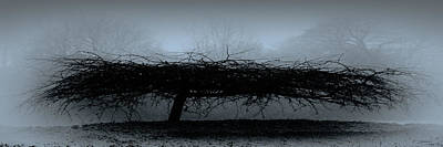 Photograph - Middlethorpe Tree In Fog Blue Panorama by Tony Grider