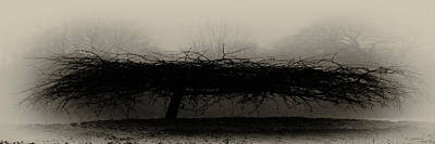 Photograph - Middlethorpe Tree In Fog Sepia Panorama by Tony Grider