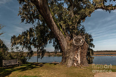 Photograph - Middleton Place Deep Roots by Dale Powell