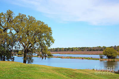 Photograph - Middleton Place Rice Field by Sharon McConnell