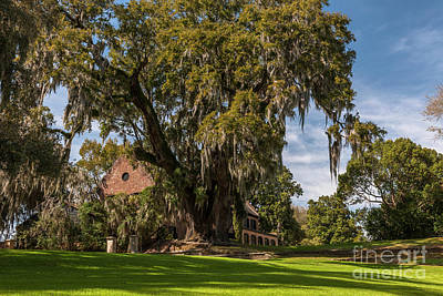 Photograph - Middleton Plantation Home In Charleston South Carolina by Dale Powell