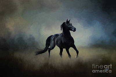 Digital Art - Midnight Black by Jim Hatch