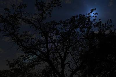 Photograph - Midnight Blue by Athala Carole Bruckner