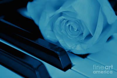 Photograph - Midnight Blues by Olga Hamilton