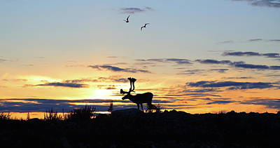 Northwest Territories Photograph - Midnight Caribou Sunset by Nick Laferriere