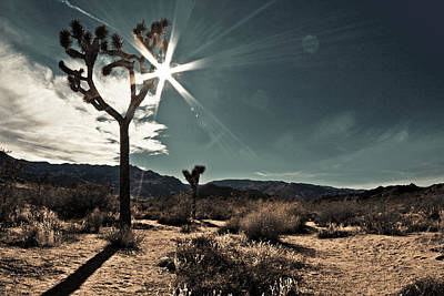 Photograph - Midnight Desert Scene #1 by Mariana Photography