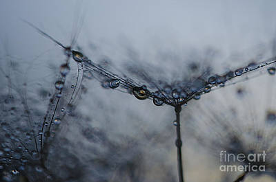 Photograph - Midnight Drop  by Nicole Markmann Nelson