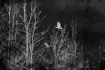 Mixed Media - Midnight Flight Silhouette Bw by Lesa Fine