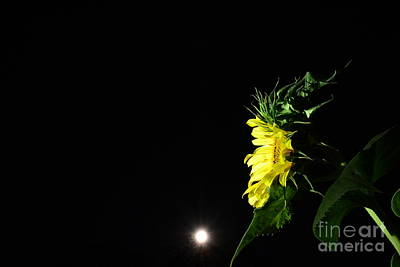 Photograph - Midnight Flower by Angela J Wright