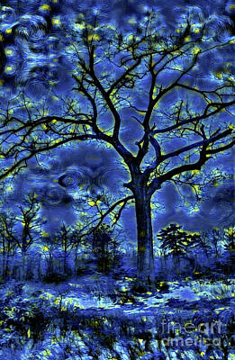 Photograph - Midnight Forest by John Stephens