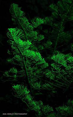 Midnight Green Art Print by Niel Morley