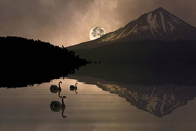 Photograph - Midnight Moods Swan Lake In The Moonlight by Diane Schuster