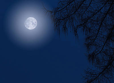 Photograph - Midnight Moon And Night Tree Silhouette by John Williams