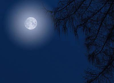 Pasta Al Dente - Midnight Moon and Night Tree Silhouette by John Williams
