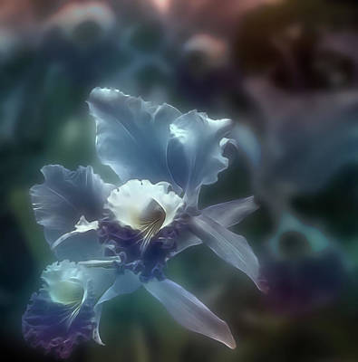 Photograph - Midnight Orchid by Maria Coulson