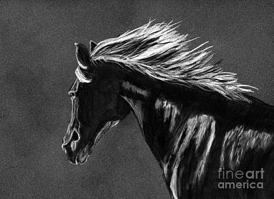 Drawing - Midnight Ride by Tracey Everington