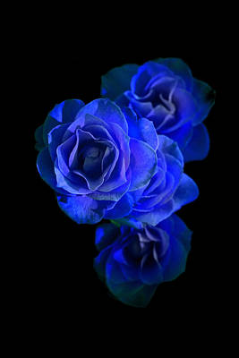 Photograph - Midnight Roses by David Andersen