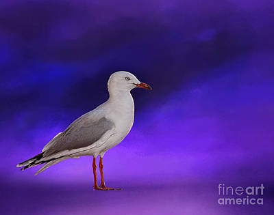 Photograph - Midnight Seagull By Kaye Menner by Kaye Menner