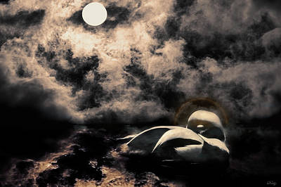 Photograph - Midnight Slumber by Dee Browning