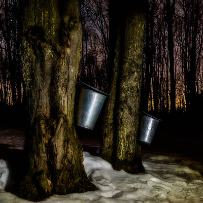 Photograph - Midnight Sugar by Chris Bordeleau