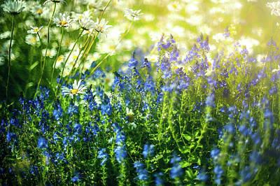 Midsummer Flowers Sweden Art Print