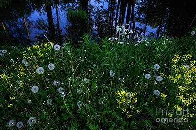 Photograph - Midsummer Night's Magic by Ismo Raisanen