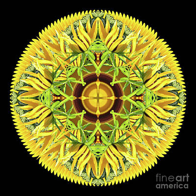 Wall Art - Photograph - Midsummer Sun Disk by Karen Jordan Allen
