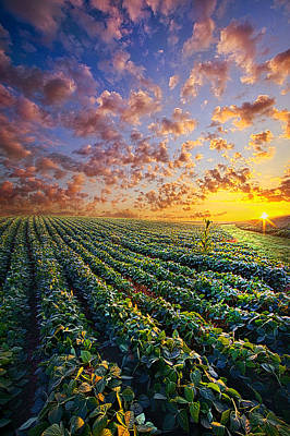 Photograph - Midsummer's Dream by Phil Koch
